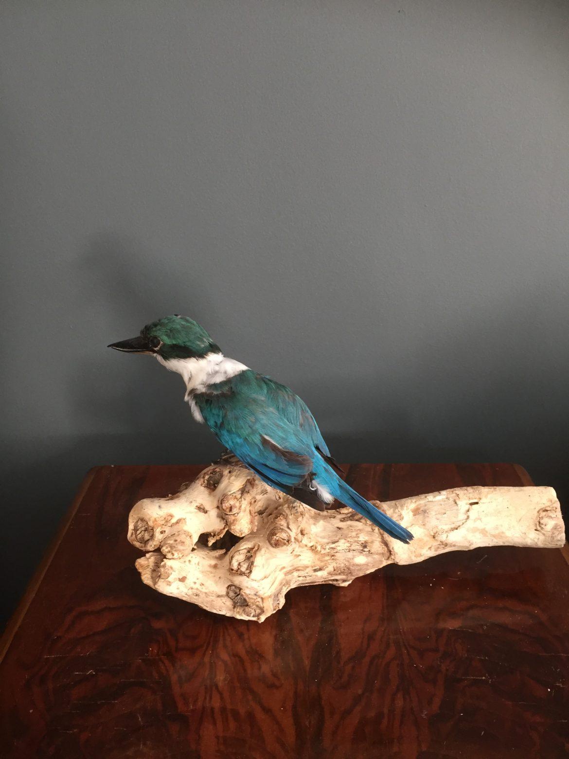kingfisher 7